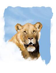 lioness by valerimarinov