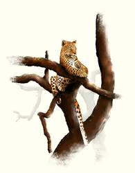 leopard by valerimarinov