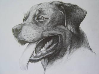 rottweiler by valerimarinov