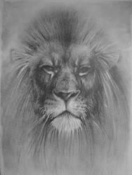 lion by valerimarinov