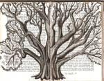 Big Tree 2 by Chrisleo92