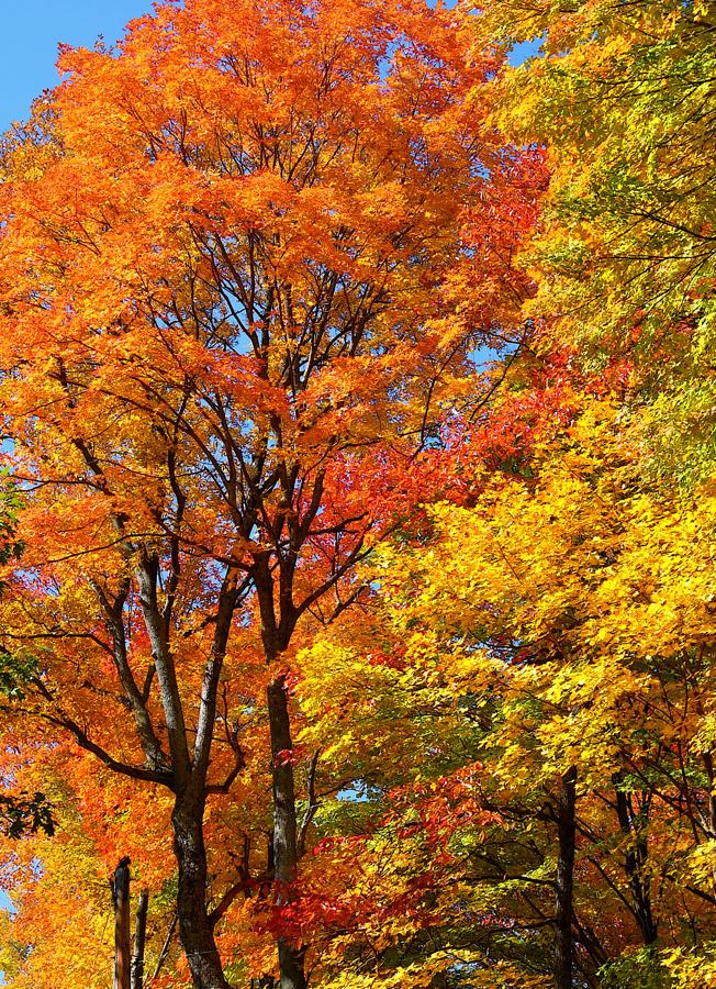Tall trees,L1040100 by harrietsfriend