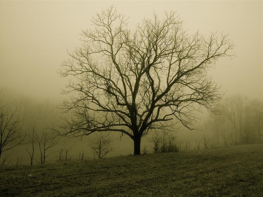 Tree in fog.L102 0653 by harrietsfriend