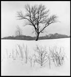 Winter tree, black and white.img670 1