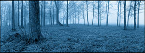 Panoramic trees in midnight blue mist, Noblex