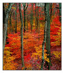 Flame forest section.img217, with story by harrietsfriend