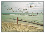 Girl chasing birds.img349, with story