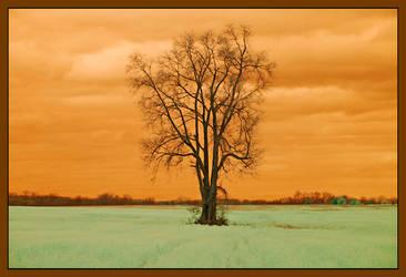 Open field tree.IRD200-1745, with story by harrietsfriend