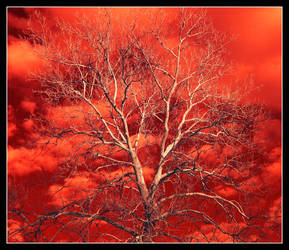 Fire sky.IRD200-1738, with story by harrietsfriend