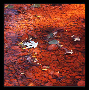 Streambed. img162, with story by harrietsfriend