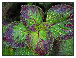 Green leaves. DSCN4187, with story by harrietsfriend