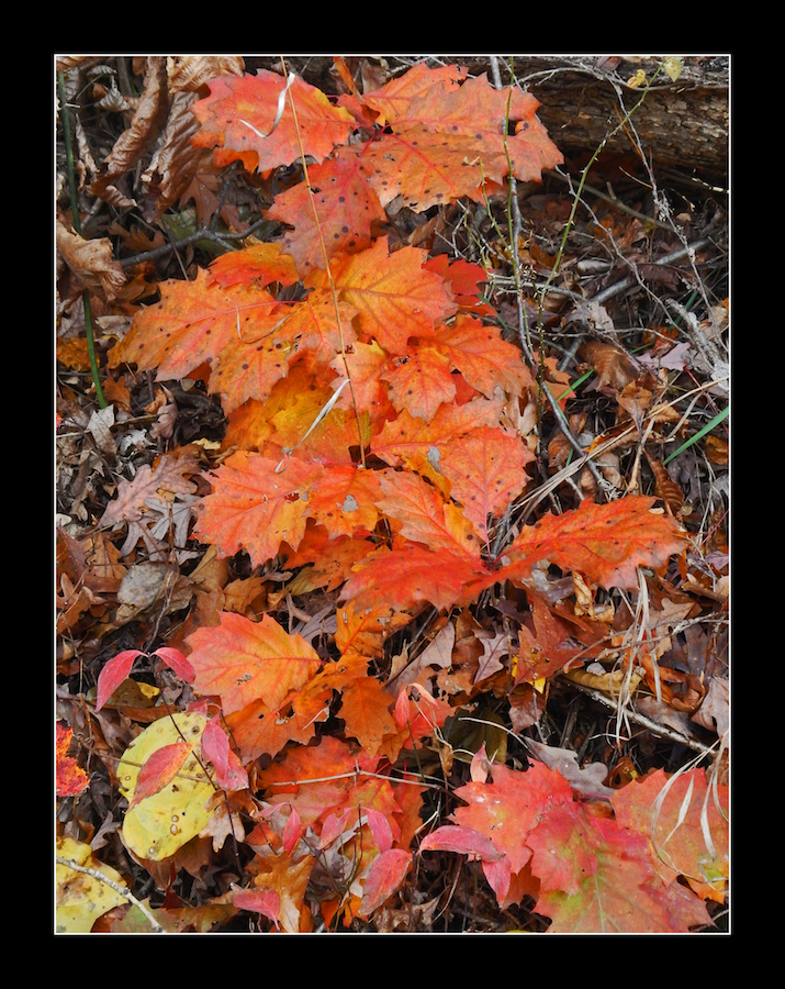 The low down on autumn. DSCN0816, with story by harrietsfriend