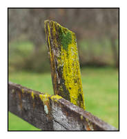 Fencepost plus. L1001239, with story by harrietsfriend