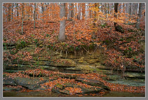 Forgotten fall color. L1001181, with story by harrietsfriend