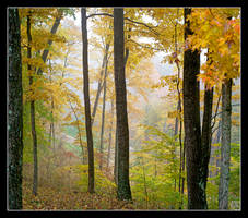 Autumn fade. L1001076, with story by harrietsfriend