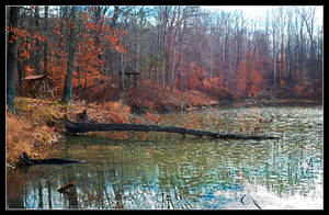 Pond's fallen log. L1001260, with story by harrietsfriend