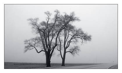Winter's foggy road. L1001456, with story by harrietsfriend