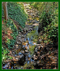 Wooded stream. DSC0015, with story by harrietsfriend