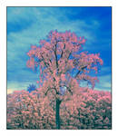 Lone tree. DIR200-2052, with story by harrietsfriend