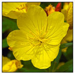 Yellow flowers. L1001603, with story by harrietsfriend