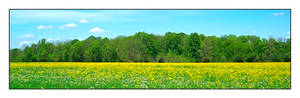 Yellow field. L1001551, with story