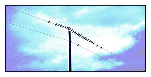 Ordinary birds. DSCN5284, with story