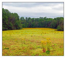 Field. L1020148, with story