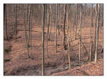 Bare forest. L1000141, with story by harrietsfriend
