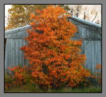 Outside barn. DSCN5474, with story