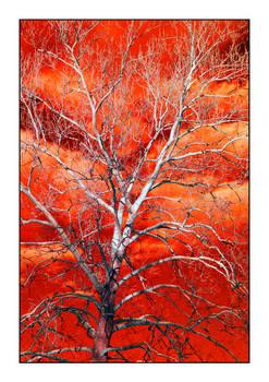 IR tree. DSC1739, with story