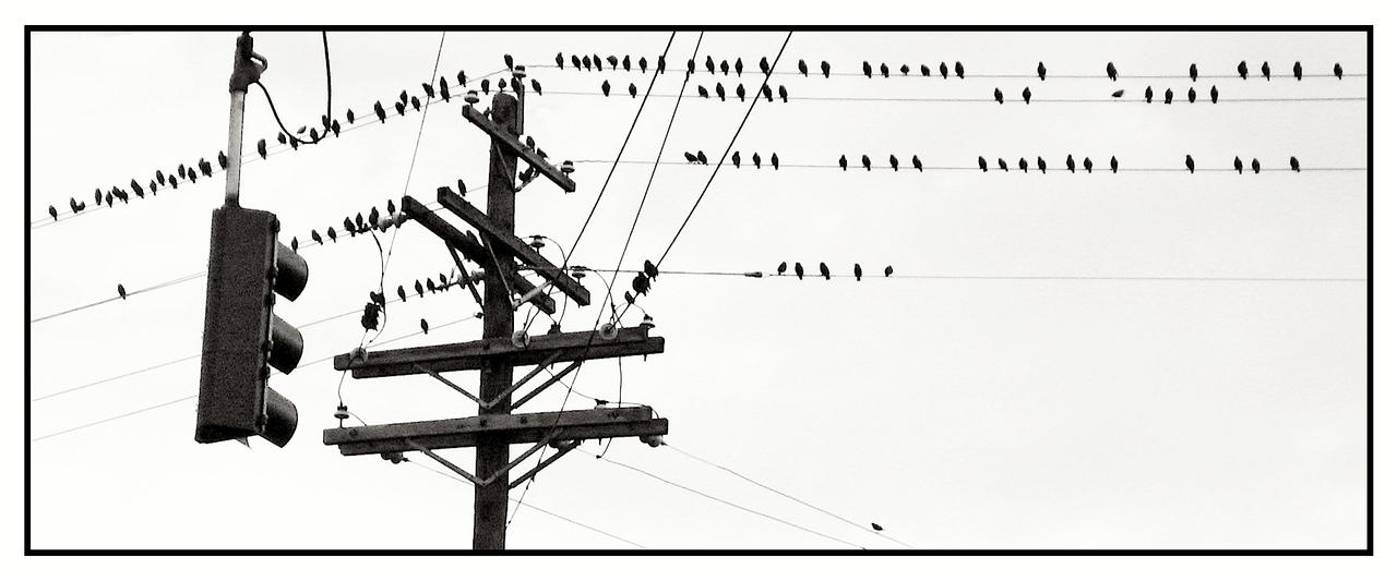 Birds. IMG 0006, with story