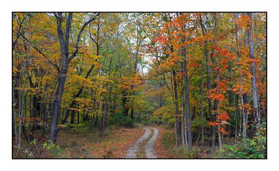 Rural drive. 800-2869