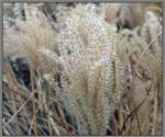 Winter field grass. L1020724