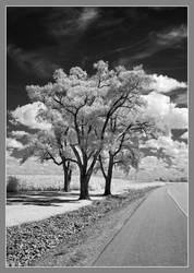 Roadside IRD200-1875 by harrietsfriend