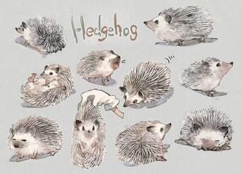 Hedgehog by aoki6311