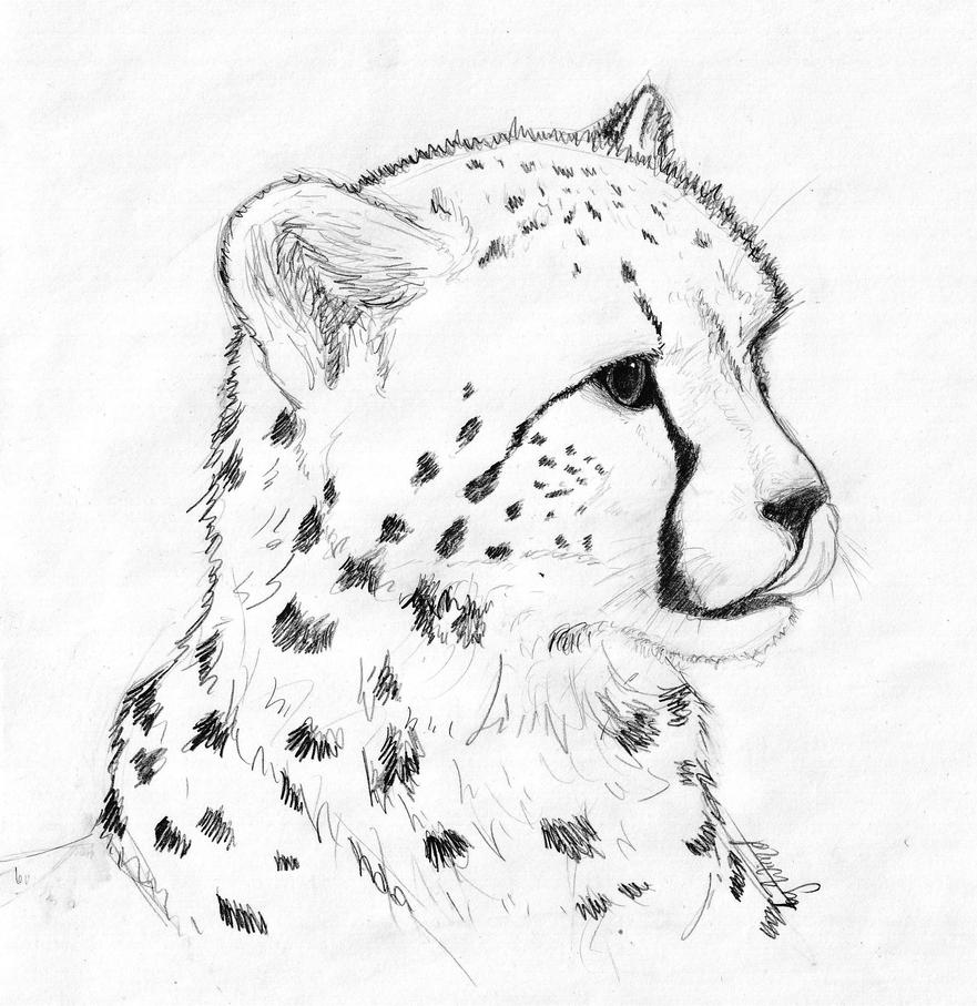 Cheetah cub by khazwindnafuto