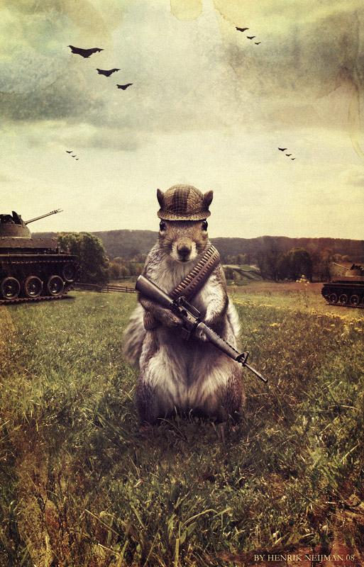 Army Squirrel by Neijman