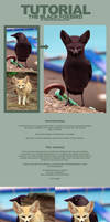 Tutorial The Black Foxbird
