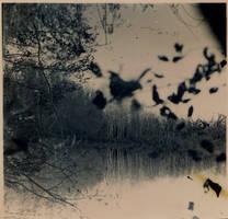autumn 2 by andrewpershin