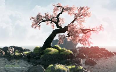 Cherry tree by DavidHansson