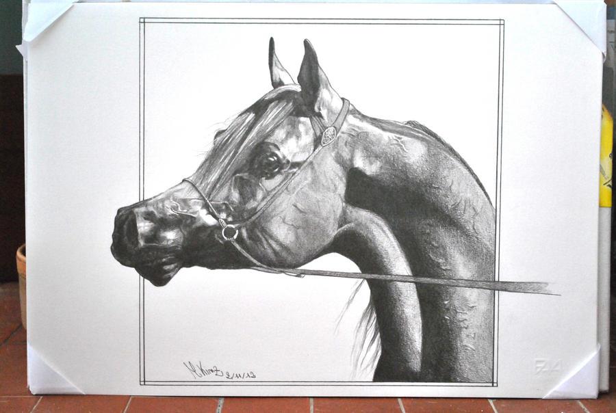 Arabian Horse. by mikinz89
