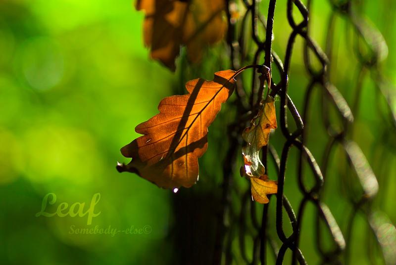 Leaf by Somebody--else