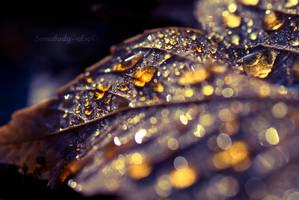 Golden by Somebody--else