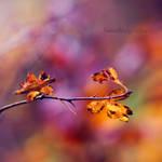 Les couleurs de Novembre