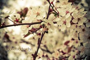 En attendant le printemps ... by Somebody--else