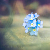 Little blue by Somebody--else
