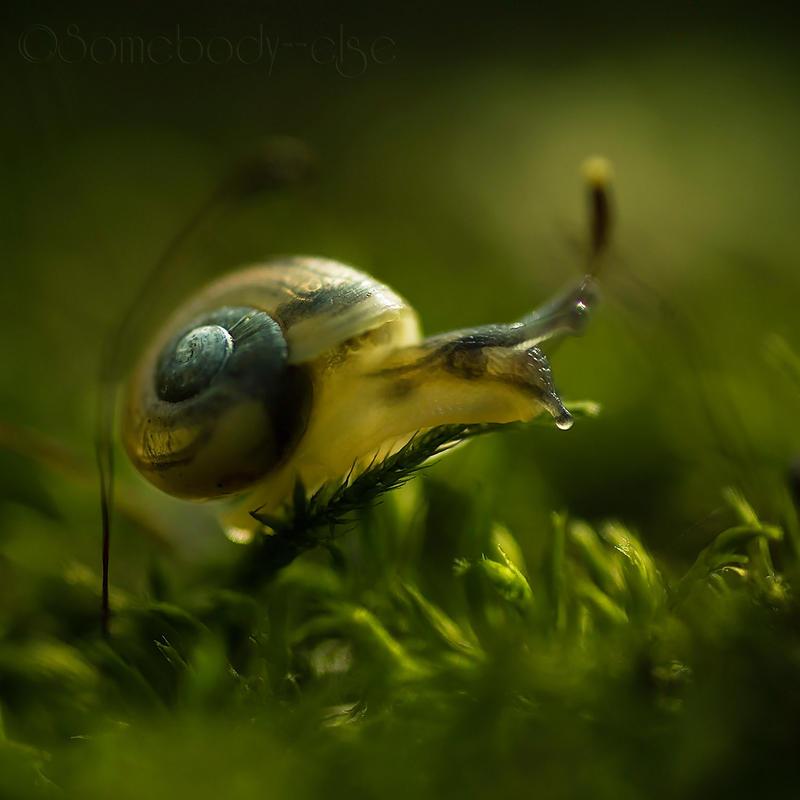 Little Snail . III by Somebody--else