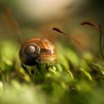 Little Snail . V
