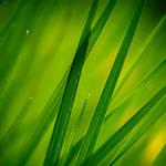 Brin d'herbes