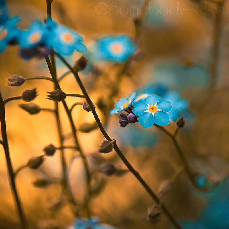 Forget me not . II by Somebody--else